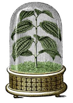 Vintage Images - Amazing Cloche with Plant - The Graphics Fairy
