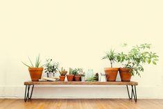 house plants bench hair pin legs