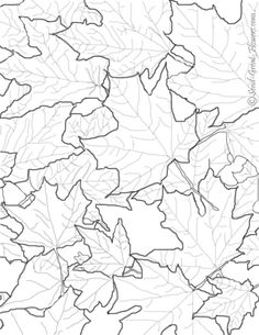 Fall Flowers Coloring Pages Printable