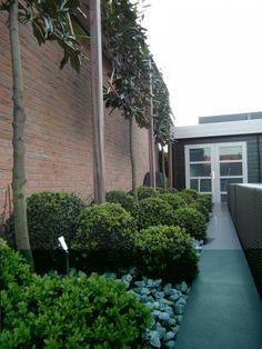 Moderne tuin rondom vrijstaande woning Rhoon | Hoveniersbedrijf Tim Kok