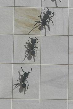 ¿Sabes dónde están las famosas hormigas de #Benicàssim?