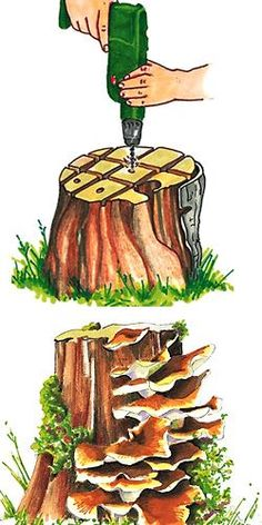 How to remove stumps – My beautiful garden -