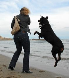 How to train your dog not to jump up
