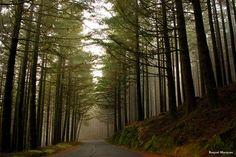 Magic Forest... Madeira Island