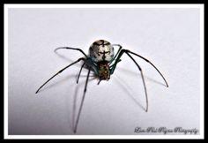 Metallic Silver Green Spider