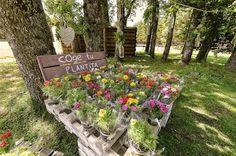 Flores para los invitados: ¿Por qué no?