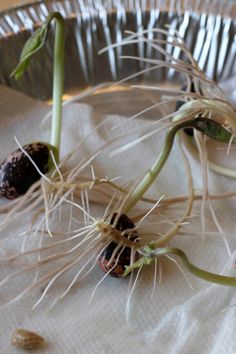 Sprouting Seeds Experiment
