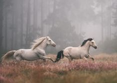 Horses on a misty forest run. (free, even if just for a moment... to feel the wind, race the wind, be the wind ♥ grace in motion, beauty true to form) J