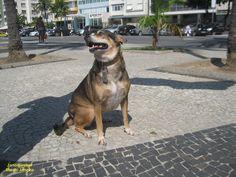 https://flic.kr/p/UCbuxQ | Kika | Kika é a princesinha de Copacabana. Rio de Janeiro