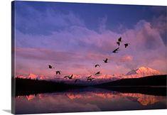 John Warden Premium Thick-Wrap Canvas Wall Art Print entitled Sandhill cranes flying past Mt McKinley Sunset Alaska & Wonder Lake Summer Composite, None