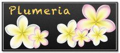 sample_plumeria-300x133.png (300×133)