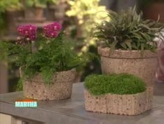 Andrea Mason shares an easy and inexpensive way to make your own garden pots.
