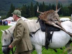 working highland ponies and deer - Google Search