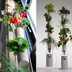Windowfarms, urban gardening.  Great idea! - www.windowfarms.com