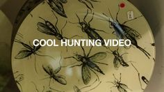 Cool Hunting Video: John Derian.  See more of our videos at coolhunting.com/video