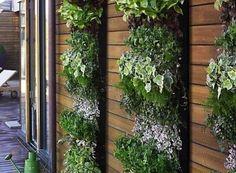 vertical green walls with wood slats in between