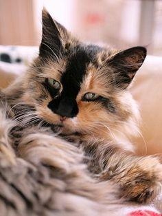 猫カフェ Cats