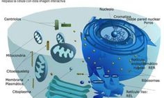15 blogs para la asignatura de Ciencias Naturales