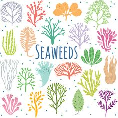 Hand drawn seaweed, coral set isolated on white background. Aquarium Drawing, Coral Tattoo, Drawing Rocks, Plant Icon, Hand Painted Dishes, Sea Plants, Bullet Journal Themes, Bullet Journals, Coral Pattern
