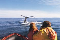 Digby, Nova Scotia ~ Photo by Digby Whales Places To Travel, Places To See, Whale Watching Season, Cape Breton, Family Roots, Nova Scotia, Whales, Far Away, Homeland