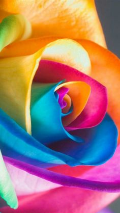 Colorful roses its like a rainbow in the sky Rainbow Flowers, Rainbow Colors, Vibrant Colors, Colours, Rainbow Art, Neon Colors, Blue Flowers, Ps Wallpaper, Flower Wallpaper