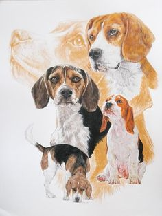 Beagle with Ghost Image - Barbara Keith Beagle Hound, Beagle Art, Beagle Puppy, Ghost Images, Cute Beagles, Watercolor Animals, Dog Portraits, Animal Paintings, Dog Art