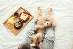 http://media.istockphoto.com/photos/young-woman-with-her-dog-in-a-bed-picture-id622990932