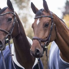 Tack, Magic, Horses, Friends, Animals, Head Bands, Animais, Animales, Animaux