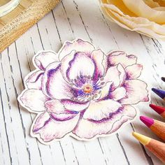 I like this purple peony even more!! Maybe it's the shape of the flower!  Colored @altenewllc #beautifulday over the weekend. I have used #polychromos pencils on #strathmore drawing paper. Now, should I make this into a card? #cardmaking #coloring #coloredpencil #stamping #stamps #clearstamps #altenew #flower #floral #thedailymarker30day