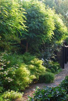 Almbacken - so nice and green Garden Inspiration, Outdoor, Plants, Beautiful Gardens, Colorful Plants, Foliage Plants, Outdoor Gardens, Garden Design, Shade Garden