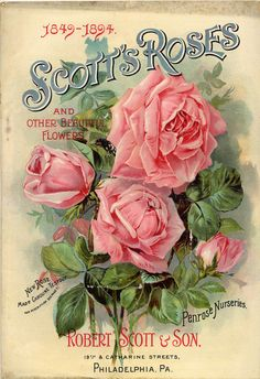 Vintage Seed Packet - Scott's Roses:    Download…