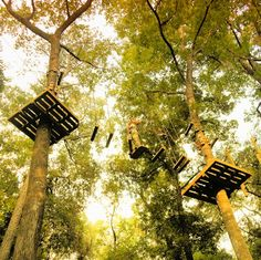 Tree to Tree Adventures in Tallahassee is high on my list of things to do in town. Can't wait to be up in the trees!