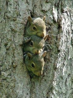 Funny Wildlife, funnywildlife: Baby Squirrels!!