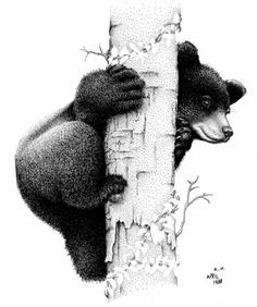 Black Bear Wood Burning Patterns - Yahoo Image Search Results Taylor Wood Burning Crafts, Wood Burning Patterns, Wood Burning Art, Wood Crafts, Ed Wood, Wood Art, Black Bear Cub, Pyrography Patterns, Bear Drawing