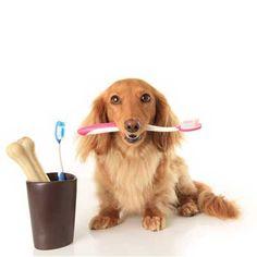 Es importante saber que al mantener una buena higiene bucal de nuestro perro, previenes de cualquier enfermedad que afecte su aparato digestivo. Es por eso que es imprescindible tratar las afeccion…