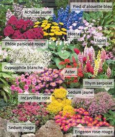 Massif d angle de gramin es p pini re plantes jardinerie vente en ligne jardin - Vivaces de rocaille avec photo ...