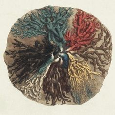 """""""Mammary ducts injected with red, yellow, black, green and brown wax."""" (detail) - Cooper - 1840"""