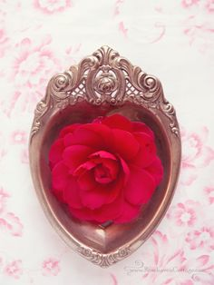 Silver heart - Red camellia (by Cindy Garber Iverson)
