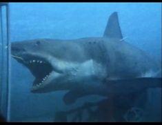 Jaws Film, Jaws 2, Jaws Movie, Horror Films, Sharks, Hulk, Monsters, Behind The Scenes, Teeth