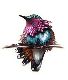 Wine Throated Hummingbird (illustration)