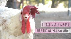 Kapparot Cruelty: The Campaign to end chickens as Kapparot in SoCal
