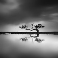Mangrove - The Tree Of Hope by Hengki Koentjoro on Art Limited