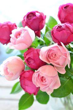 Sueños compartidos: Flores