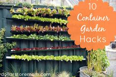 DIY Container Gardening Ideas