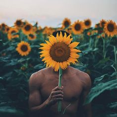 Visit the sunflower fields ( on 26 best things to do on Oahu) Portrait Photography Men, Photography Poses For Men, Creative Photography, Nature Photography, Black Pics, Image Basket, Kreative Portraits, Sunflower Photography, Poses References