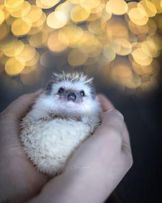 Hedgehog Hollow viktoriahaack