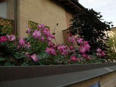 Piante e fiori da balcone resistenti (Foto) | PourFemme