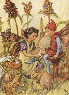 ♥ Mary Cicely Barker's Self heal Fairy