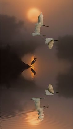 ineffably Gorgeous   reikogeisha:   fino-al-di-la-del-tutto:   Dream by...