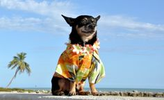 A Little Sand, Surf, and Doggie Treats: Dog-Friendly Beaches in CT